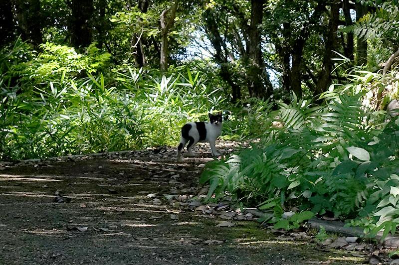 筆山公園 志鵬台・筆の鼻広場  偶然猫に遭遇