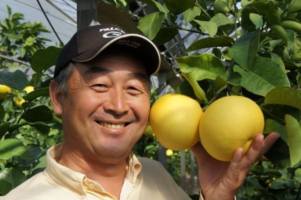 「土佐文旦」発祥の地の果樹園