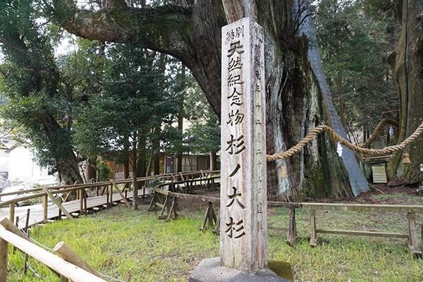 推定樹齢3000年の杉の大杉