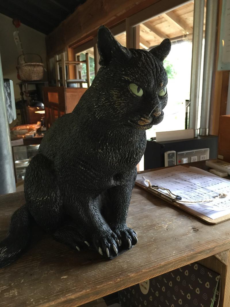 土佐水木の黒猫