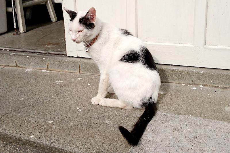 アルパカフェ 入口前の猫さん