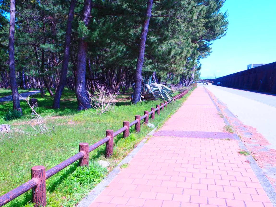 P3251696_Fotor.jpg