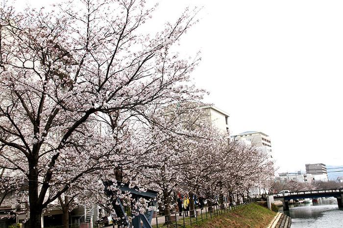 桜のきれいなスポット