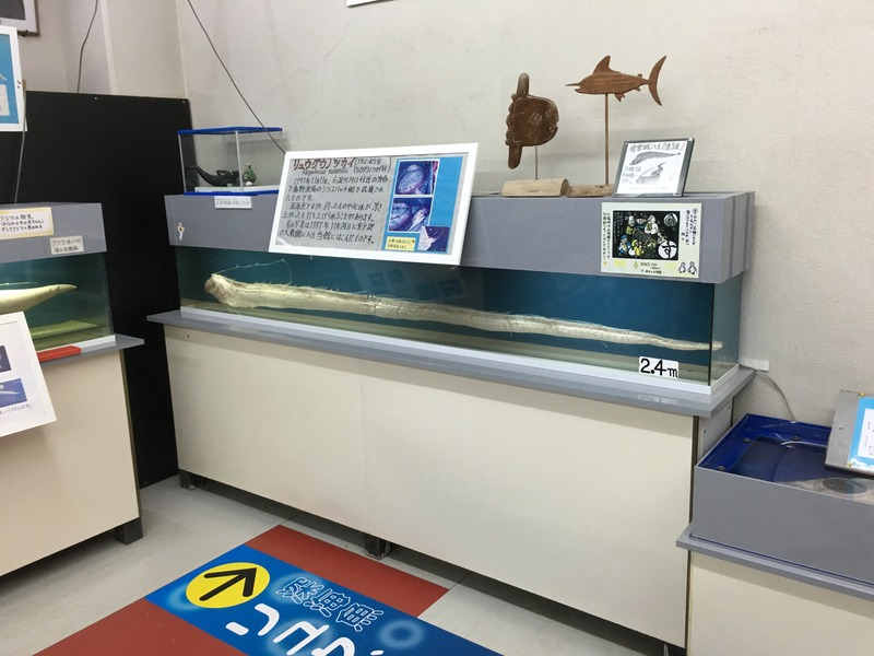 桂浜水族館の桂浜水族館のほねほねルーム2