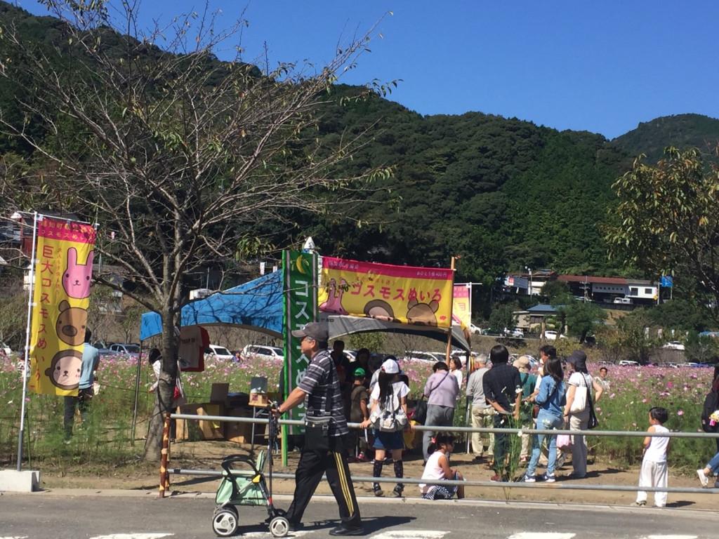 コスモス祭り_4082.jpg